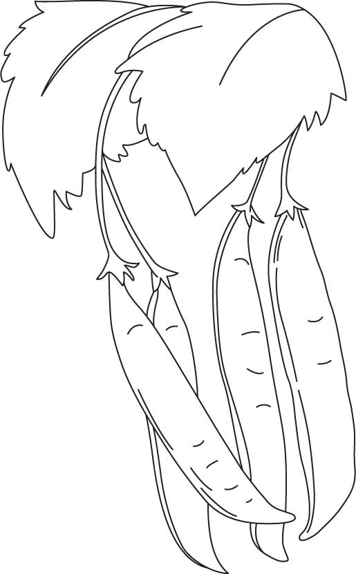 Coloring Page Pea Coloring Pages