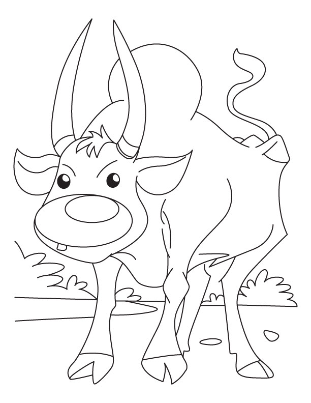 This is a photo of Mesmerizing Ox Coloring Page