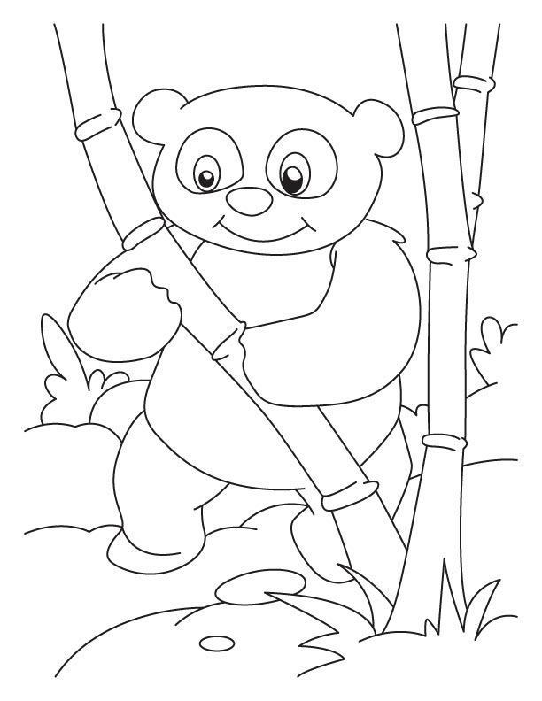 bamboo lover panda coloring pages free
