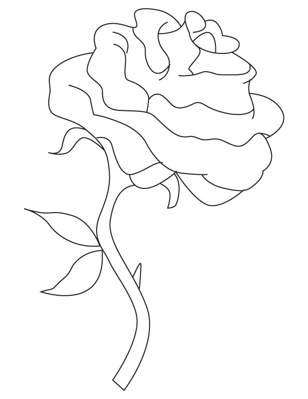 Pages Of Long Stem Roses Coloring Pages