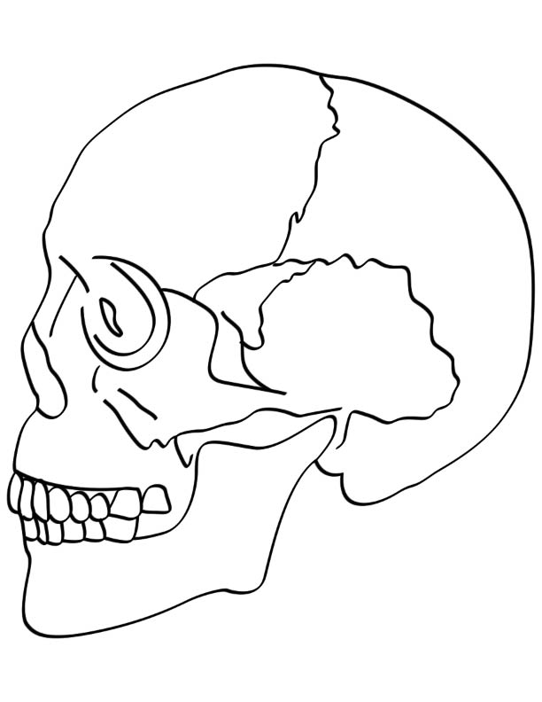 Skull bones coloring pages coloring page for Skull coloring pages anatomy