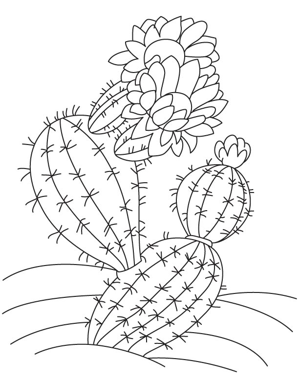 The cactus coloring page | Download Free The cactus ...
